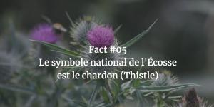 Fact #05 - Le symbole national de l'Ecosse est le chardon (Thistle)