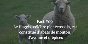 Fact #09 - Le Haggis, célèbre plat écossais, est constitué d'abats de mouton, d'avoine est d'épices